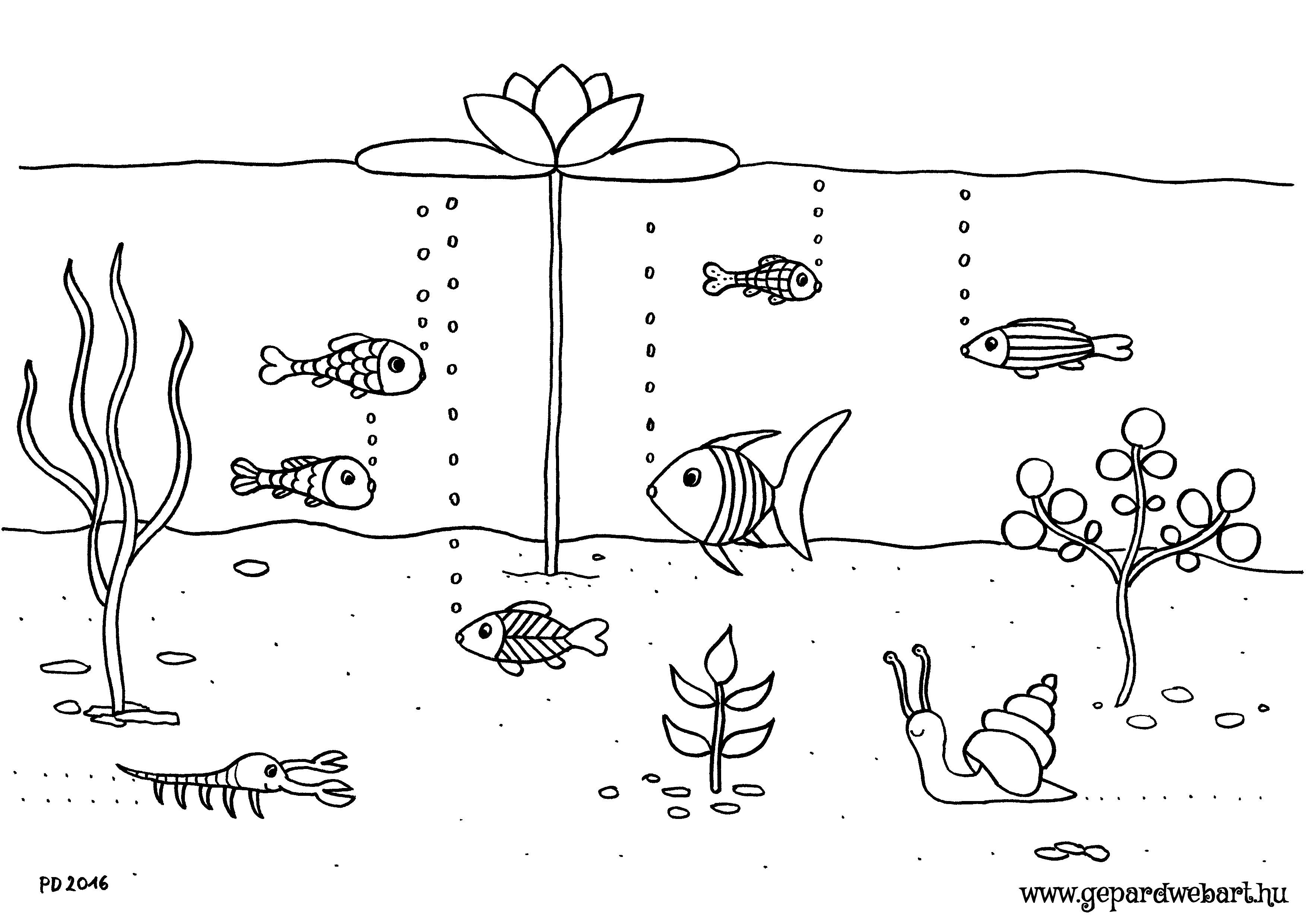 halas kiszínező