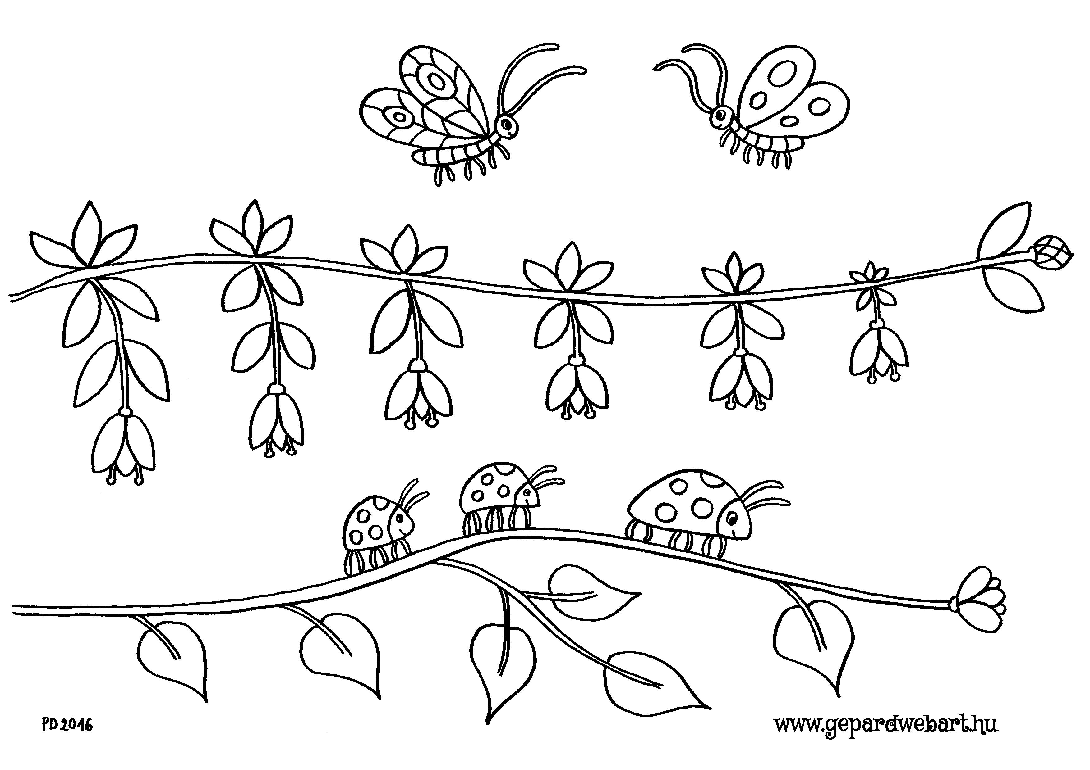 katicás, lepkés kiszínező